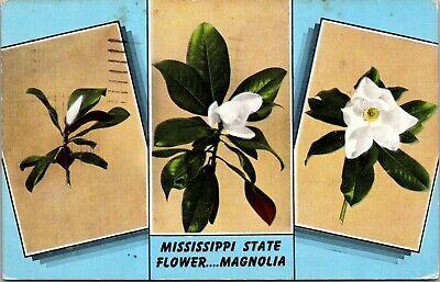 C 1948 Mississippi State Flower - Magnolia plants  MILITARY POSTED POSTCARD - Mississippi State Flower Magnolia