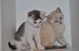 Adorable Kittens Ready for a Forever Home!