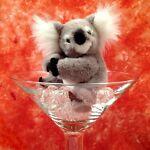 Koala in a Glass