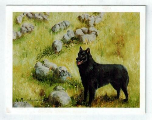 New Belgian Sheepdog With White Sheeps Notecard Set 12 Note Cards Ruth Maystead