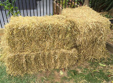 Hay /straw bales - great for garden or party Bray Park Pine Rivers Area Preview