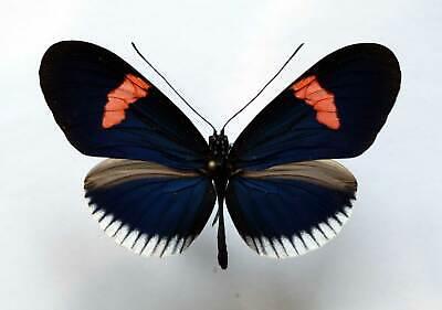 DF10 # Lot of 10 Unmounted Day flying zygaenidae Campylotes burmana Vietnam