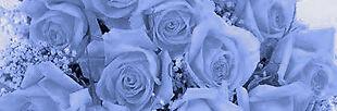 Hawking Blue Roses