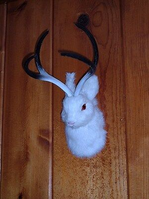 JACKALOPE Head Mount REALISTIC FURRY ANIMAL REPLICA r1803 wht FREE SHIPPING USA for sale  Ely