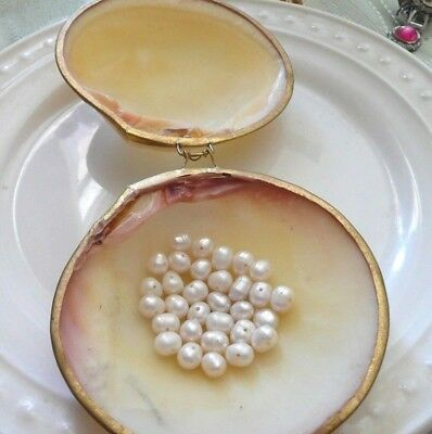 Genuine Baroque Pearls Real Shell Container