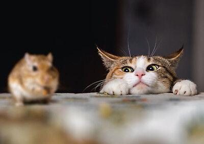 Ansichtskarte: Ein Leckerbissen, aber so schwer erreichbar! - Katze und Maus