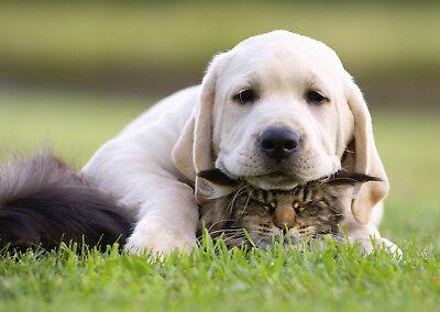 Ansichtskarte: Liebe ist manchmal überwältigend - Hund und Katze