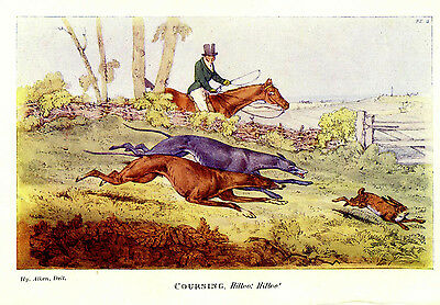 GREYHOUND DOGS COURSING HARES RABBITS, HORSEBACK HUNTER WITH WHIP HUNTING PRINT for sale  Fort Collins