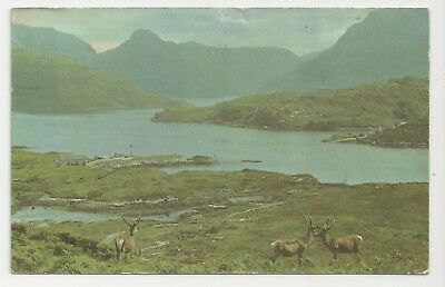 Postcard, PT36212, Wilds of Sutherland, Stack Glencoul with stags, Posted 1971