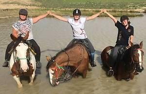 Billabong Ranch Horse Riding Camp Moama Murray Area Preview
