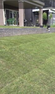 Quality and Cheap Spring Cleanup for your Lawn!