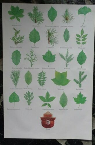 """Vintage 1977 Smokey Bear US Forest Service Issued 28"""" x 19"""" Tree leaves."""