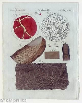 Haut-Blut-Medizin-Mikroskopie - Bertuch-Kupferstich 1810 Gefühl-Sinne