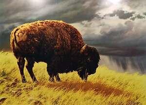Buffalo by Greg Beecham American Bison Western Plains Grassland Poster Art