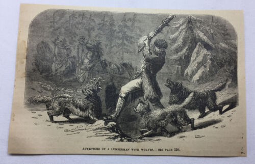 1877 magazine engraving ~ ADVENTURE OF A LUMBERMAN WITH WOLVES