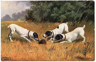 SMOOTH FOX TERRIER DOGS AND HEDGEHOG OLD DOG ART POSTCARD
