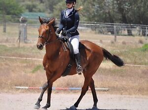 Lease option suit ambitious rider or first horse Oakford Serpentine Area Preview