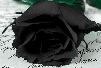 Framed Print - Black Rose on a Hand Written Letter (Picture Poster Flower Art)