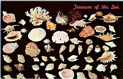 1960's Treasures of the Sea Vintage Postcard of Shells and Coral from California ()