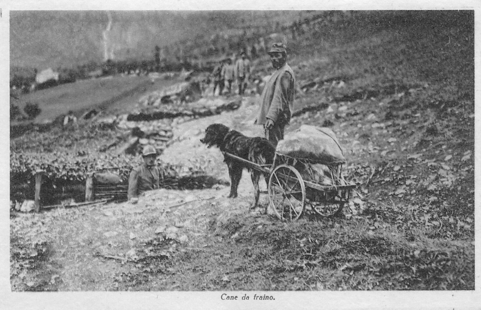 C2778) WW1, CANE DA TRAINO CON IL CARRETTINO PIENO DI MATERIALE.