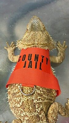 """Lil' Bestie Bearded Dragon reptile Harness and Leash COUNTY JAIL """"ESCAPEE"""""""