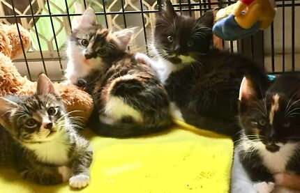 URGENT URGENT RESCUED GORGEOUS 4 SIBLINGS NEED LOVING HOMES