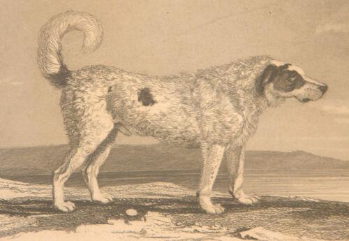 ANTIQUE VICTORIAN 1846 STEEL ENGRAVING OF NEWFOUNDLAND DOG FRAMED PRINT