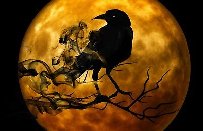 Halloween Raven & Orange Moon -  Art Picture Poster Photo Print 2FAL (Orange Moon Halloween)