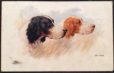 Setters Dogs Vintage Postcard