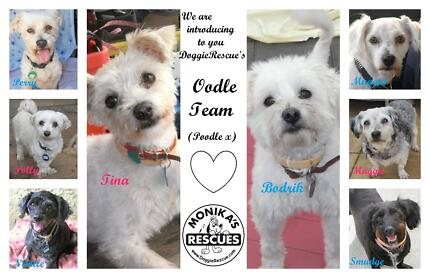 The Oodle Team at DoggieRescue Sydney Region Preview