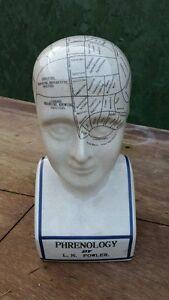 Extra Large Phrenology Head - 12