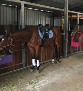 Thoroughbred gelding for sale Priestdale Logan Area Preview