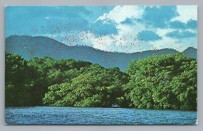 Bird Sanctuary TRINIDAD Vintage PC Scarlet Ibis Birding Ornithology—Setty 1960s