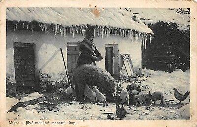 AK Mikor a jövo menazsi menazsit kap Frau bei Schweine fütern Postkarte vor (Frauen Kaps)