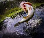 FISHING AND OUTDOOR FUN STUFF
