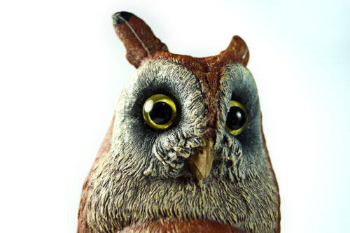 """10"""" Vienna Bronze OWL BERGMANN coldpainted signed NamGreb"""