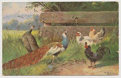 H hner Mit Hahn Und Pfau, Feldpost Berlin 1915, K nstlerkarte - 3,50 €