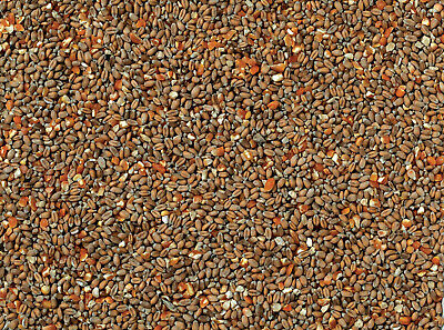 Premium High Quality Mixed Poultry Corn Wild Bird Food 20kg