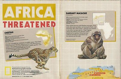Color Map AFRICA Endangered Wildlife Gorilla Zebra Elephant Rhinoceros Cheetah