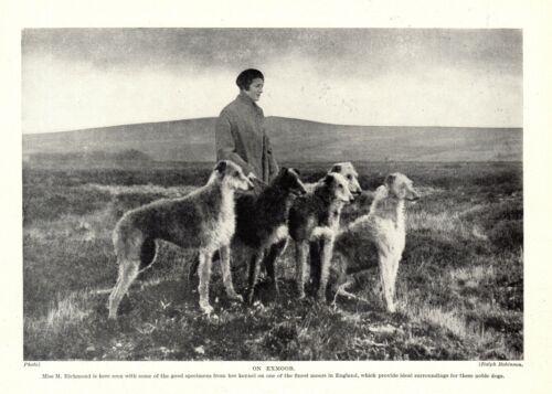 1930s Antique DEERHOUND Dog Print Richmond Deerhounds on Exmoor Print 3527-D