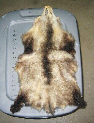 2b8da72f51f25 1 Natural Tanned Opossum Hide skin..#2 Grade..Item #O-7..COMBINE SHIPPING