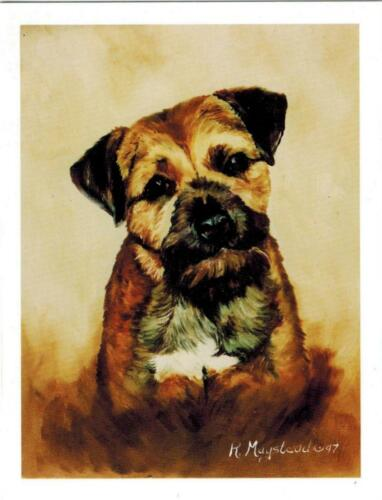 New Border Terrier Portrait Notecard Set - 6 Note Cards Ruth Maystead (BOR-1)