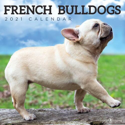 French Bulldog 2021 Calendar