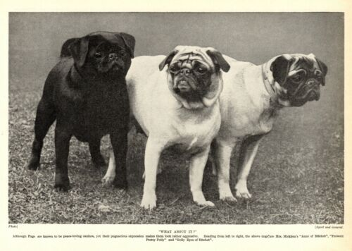 1930s Antique Pug Dog Print Anne Pretty Polly & G. Eyes of Bitchet Pug 3871g