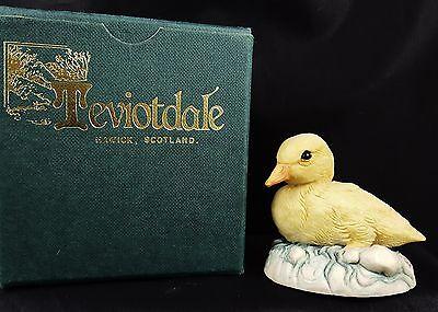 Very Cute Mint In Box Teviotdale Duckling
