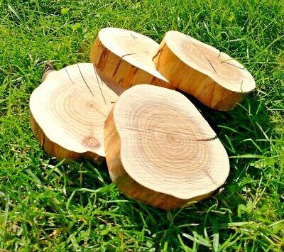 9 Naturholz (20 x HOLZSCHEIBEN EIBE // BAUMSCHEIBEN // 7-9CM // DEKO // NATUR // UNBEHANDELT)