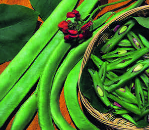 Vegetable-Runner-Bean-Scarlet-Emperor-50-Seeds-High-Yield