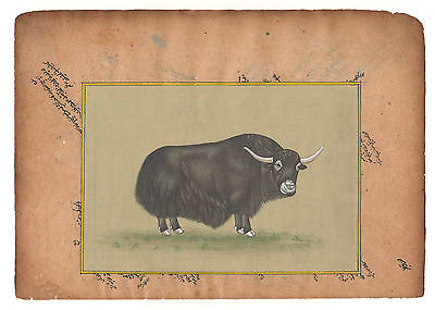Antique  Miniature Painting Artwork Art Gallery Animal Himalayan Yaak INDIA