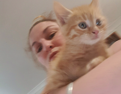 Ginger boy kitten. Wormed and ready to go.