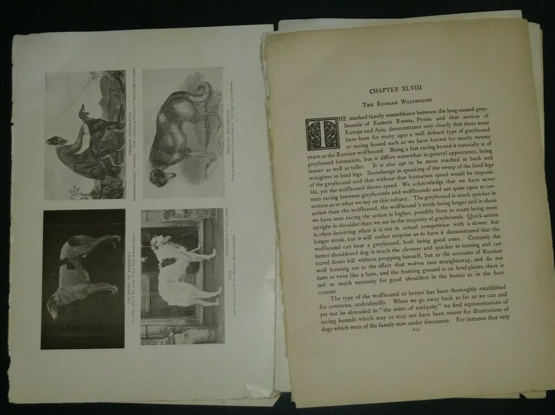 Russian Wolfhound Breed History & Photos from the 1906 Dog Book by James Watson